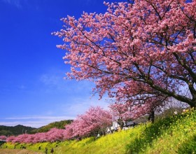 【24節季】春分