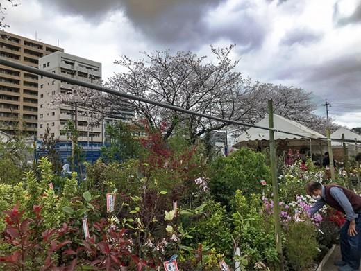SPRING PLANT MARKET 2021 <br />(HARU-no KI-ICHI / 春の木市)