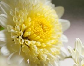 重陽の節句 ~菊を愛でる~