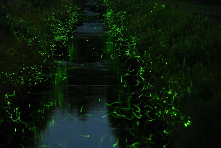 【Firefly Viewing】 <br />HIRABO FIREFLY FESTIVAL  <br />(HIRABO HOTARU-no SATO HOTARU-MATSURI / <br />ひらぼうほたるの里「ほたる祭り」)