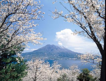 [お花見情報] 吉野公園桜まつり