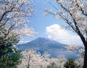 春♪ さくら♪ 鹿児島お花見情報2016