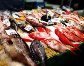 Amazing! Kagoshima Fish Market Tour