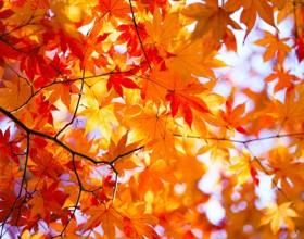 紅葉狩り <br />~鹿児島の秋の名所と紅葉狩りイベント~