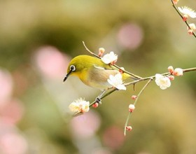 【24節気】立春