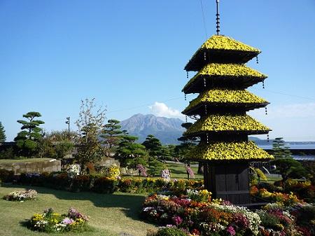 仙巌園菊まつり 2013