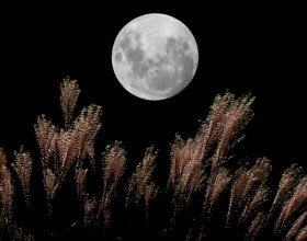 Harvest Moon Viewing - September 8th -
