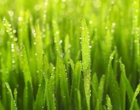 【24節気】穀雨