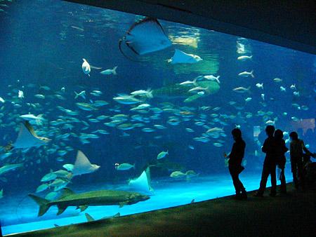 かごしま水族館 「いおワールド」