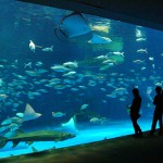 "Kagoshima City Aquarium ""Io World"""