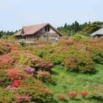 Takatouge Tsutsujigaoka Park